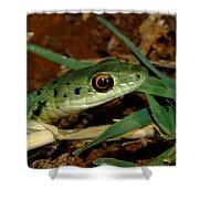 Spotted Bush Snake Philothamnus Semivariegatus Shower Curtain