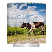 Calf Walking In Natural Landscape  Shower Curtain