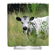 Spotted Cow In The Forest Shower Curtain