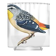 Spotted Diamondbird Shower Curtain