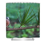 Spotted Dove Shower Curtain