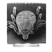 Spotted Fever Tick Shower Curtain
