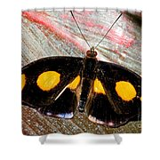 Spotted Grecian Shoemaker Butterfly Shower Curtain
