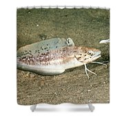 Spotted Hake Shower Curtain