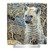 Spotted Hyena Pup In Kruger National Park-south Africa  Shower Curtain