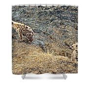 Spotted Hyena Pups In Kruger National Park-south Africa Shower Curtain