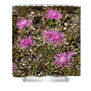Spotted Knapweed Shower Curtain