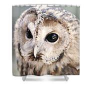 Spotted Owl Shower Curtain