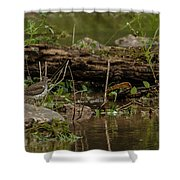 Spotted Sandpiper 2 Shower Curtain