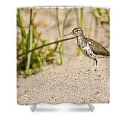 Spotted Sandpiper Pictures 45 Shower Curtain