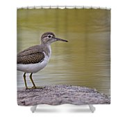 Spotted Sandpiper Pictures 51 Shower Curtain