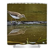 Spotted Sandpiper Pictures 61 Shower Curtain