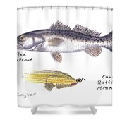 Spotted Seatrout And Rattlin' Minnow Fly Shower Curtain