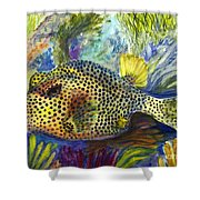 Spotted Trunkfish Shower Curtain