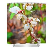 Spotted Wintergreen On Horseshoe Lake Trail In Denali Np-ak - Shower Curtain