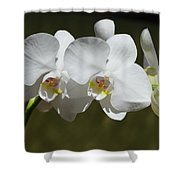 Spray Of Beautiful White Orchids Shower Curtain