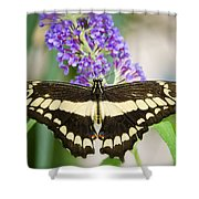 Spread Your Wings My Little Butterfly  Shower Curtain
