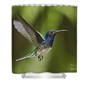 Spread Your Wings... Shower Curtain