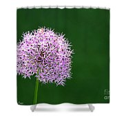 Spring Allium Shower Curtain