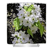 Spring Apple Blossoms Shower Curtain