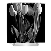 Spring Beauties Bw Shower Curtain