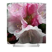 Spring Bells Shower Curtain
