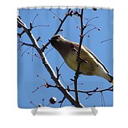 Spring Bird And Berries Shower Curtain