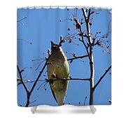 Spring Bird Singing Shower Curtain