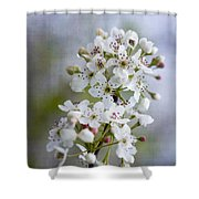 Spring Blooming Bradford Pear Blossoms Shower Curtain