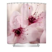 Spring Blooms 0174 Shower Curtain