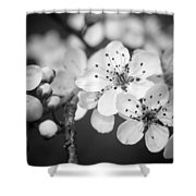 Spring Blooms 6690 Shower Curtain