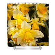 Spring Blooms 6739 Shower Curtain