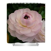 Spring Blooms Of 2013 A  Shower Curtain