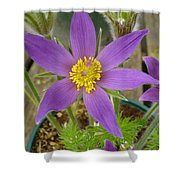 Spring Blooms Of 2013 B Shower Curtain