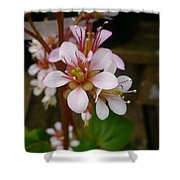 Spring Blooms Of 2013 D Shower Curtain