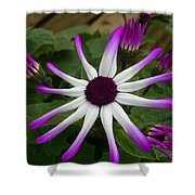 Spring Blooms Of 2013 E Shower Curtain