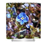 Spring Blooms Of 2013 F Shower Curtain