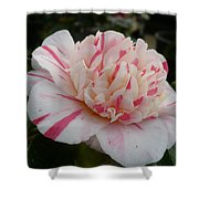 Spring Blooms Of 2013 G Shower Curtain