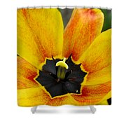 Spring Blossom Sbp Shower Curtain