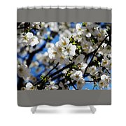 Spring Blossoms, Baltimore Shower Curtain