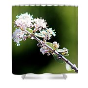 Spring Blossoms White 031015aa Shower Curtain