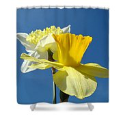 Spring Blue Sky Yellow Daffodil Flowers Art Prints Shower Curtain by Baslee Troutman