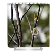 Spring Branches 1 Shower Curtain