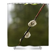Spring Branches And Buds Shower Curtain