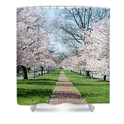 Spring Cherry Trees Shower Curtain