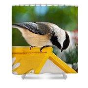 Spring Chickadee Shower Curtain