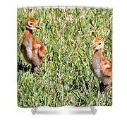 Spring Chicks  Shower Curtain