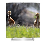 Spring Chicks In The Sunshine Shower Curtain