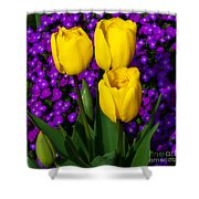 Spring Colours Shower Curtain