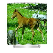 Spring Colt  Shower Curtain